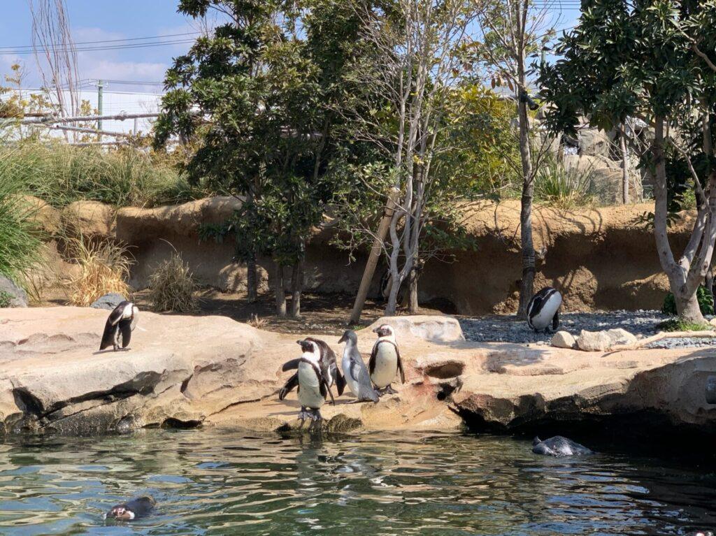 神戸どうぶつ王国ペンギン
