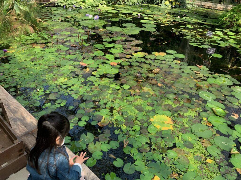 神戸どうぶつ王国ウォーターリリーズのスイレン池